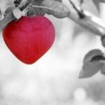 תקשוידאו עם טוהר - איבוד שליטה וחזרה ללב