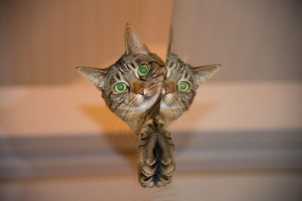 cat-697113_1920 (1)